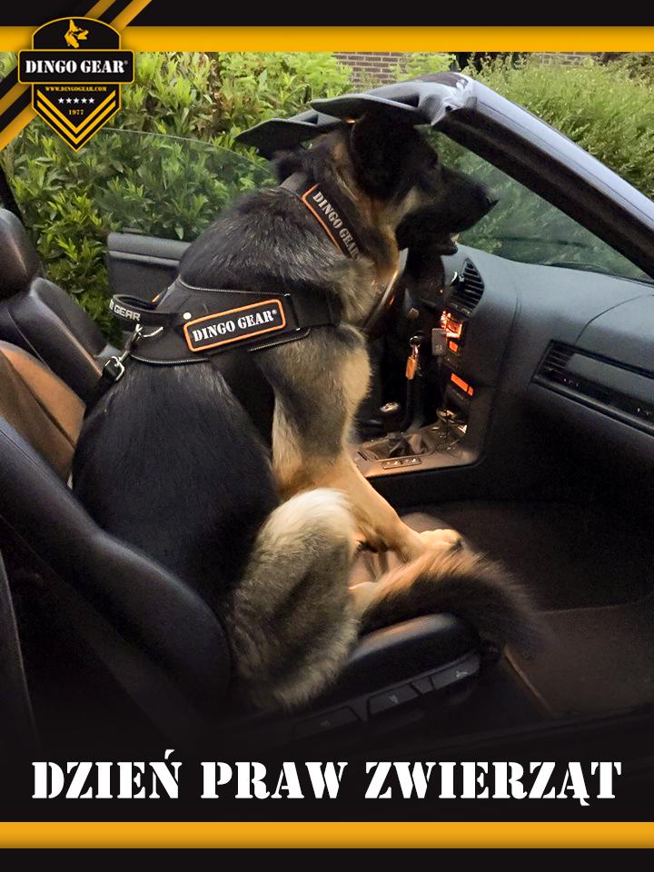 Szanuj zwierzęta i dbaj o ich prawa!