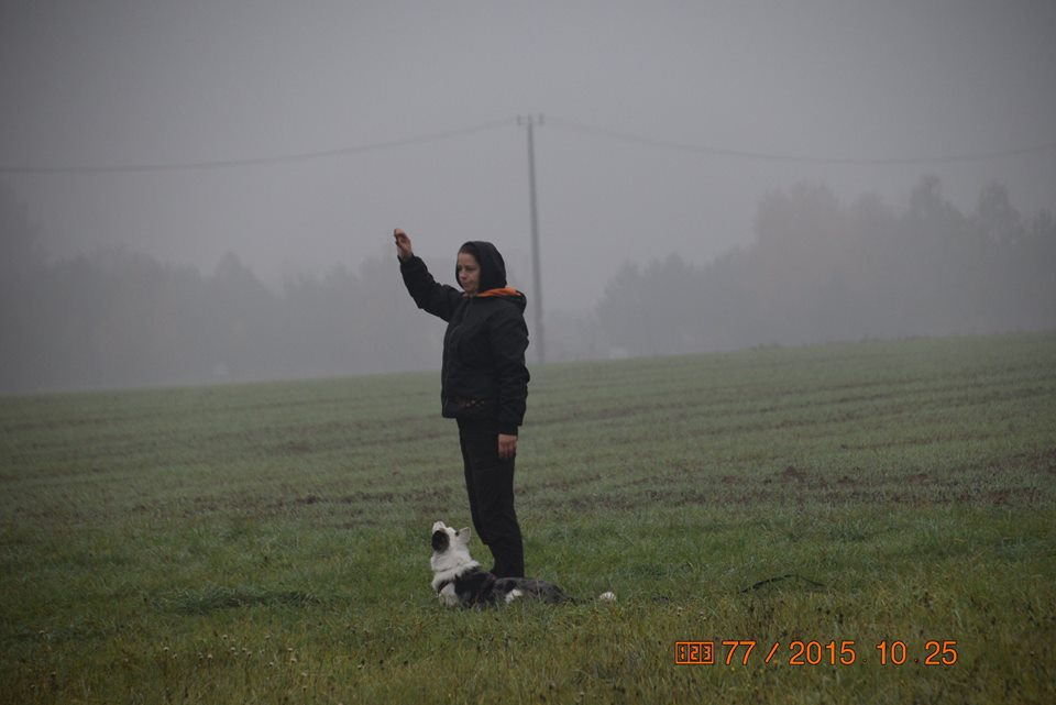 Egzamin IPO-1 na placu treningowym Aport II – Ośrodek Szkoleniowy Krzysztof Brzoskniewicz