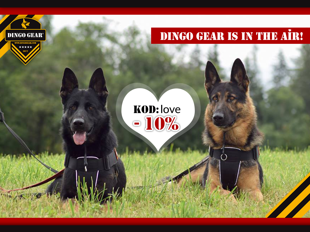 Dingo Gear is in the air!