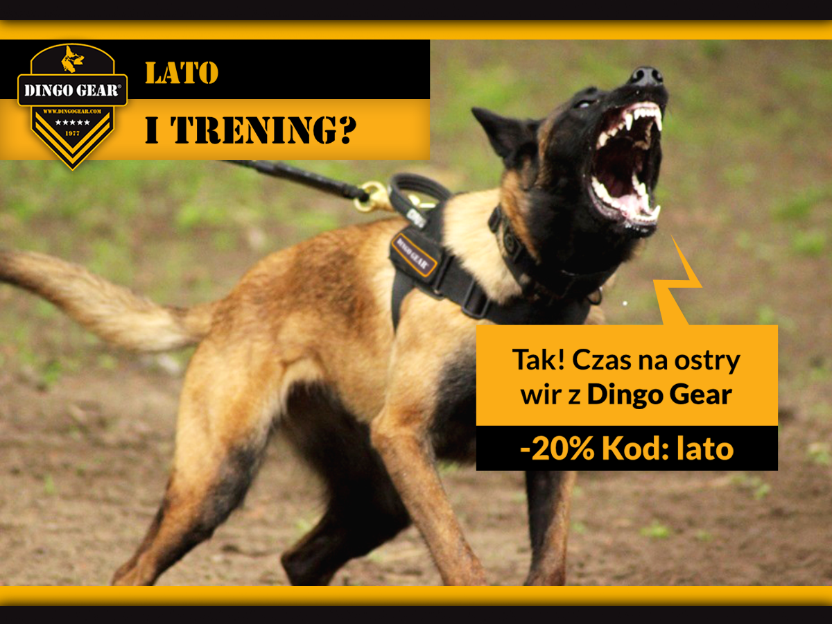 Czas na ostry wir z Dingo Gear!