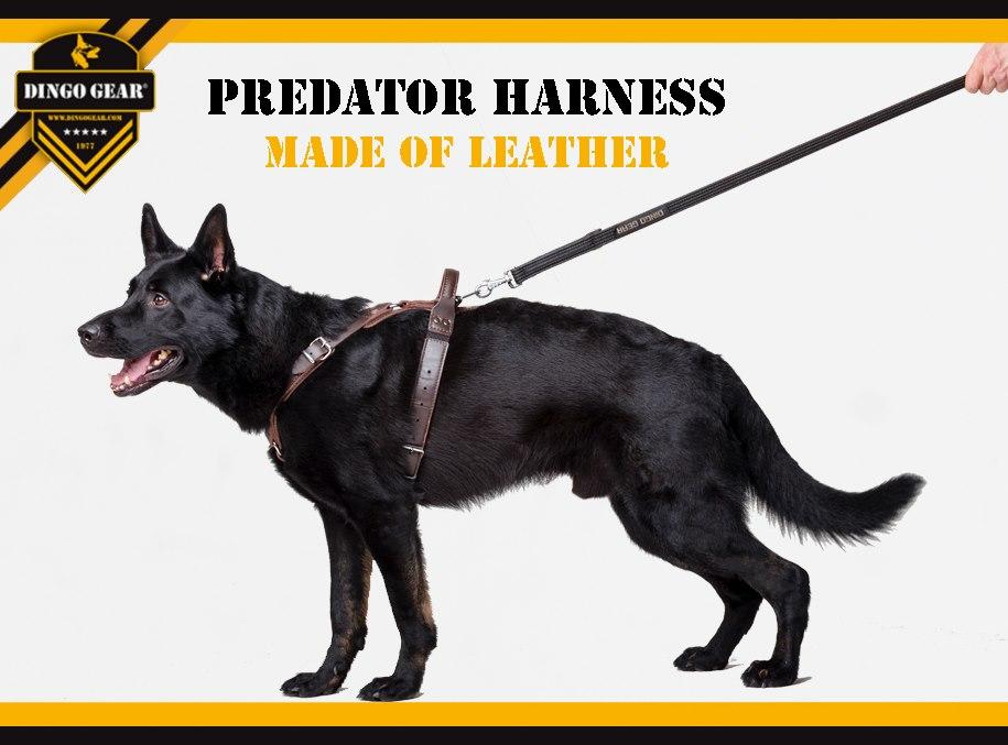 Predator harness made of leather