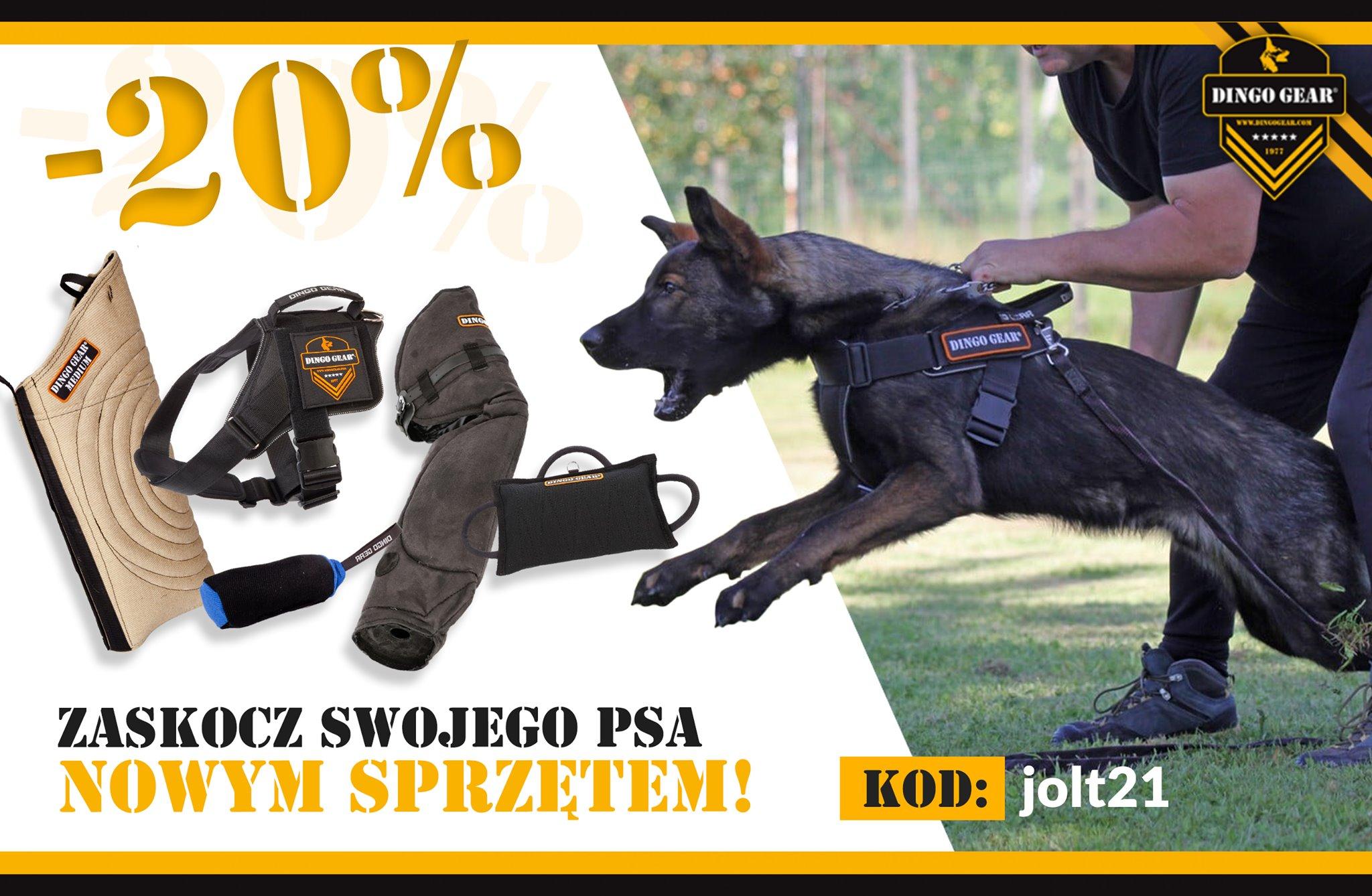 Zaskocz swojego psa innym sprzętem od Dingo Gear!