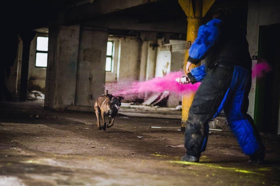 Pozorant byłby bez szans! Trening z psami w wykonaniu naszych partnerów z Czechdogsport K9 Store.