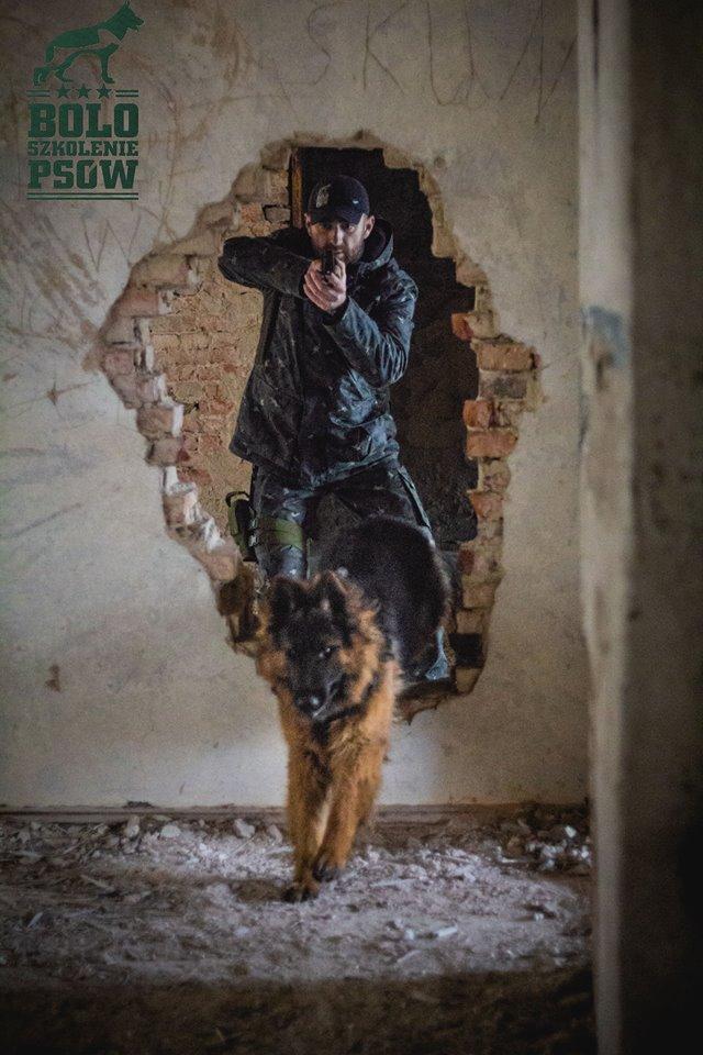 Bolo- projekt pies bojowy kontynuacja