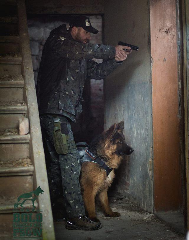 BOLO – projekt pies bojowy