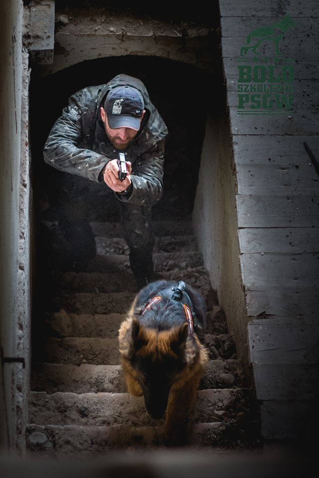 """Szkolenie i hotel dla psów """"BOLO"""" Dawid Misiurski – partner Dingo Gear"""