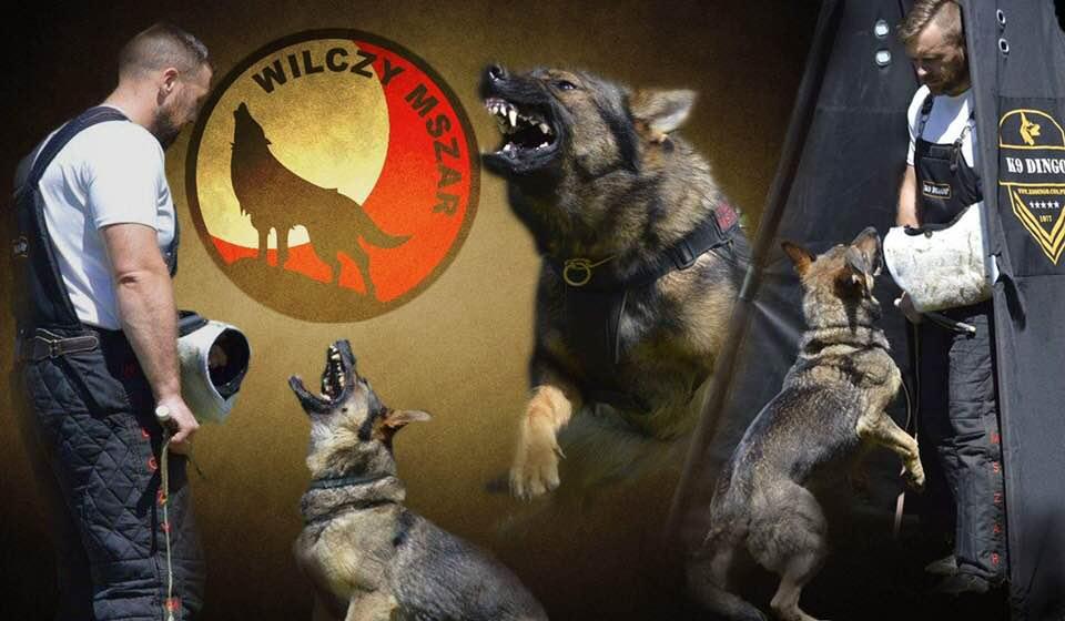 Wilczy Mszar – Tomasz Wojciechowski- partner Dingo Gear