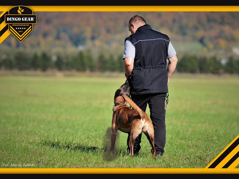 1 lipiec- Międzynarodowy Dzień Psa