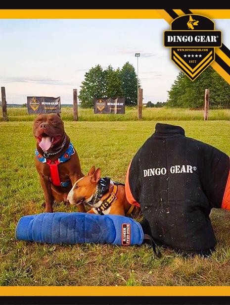 Nie zgryzaj tylko trenuj z Dingo Gear!
