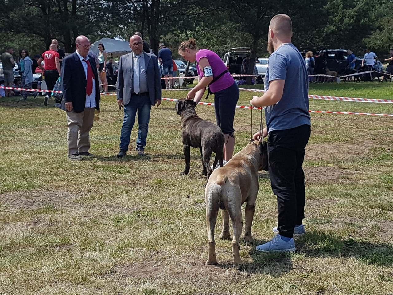 Polskie Dni Cane Corso –  7-9.06.2019
