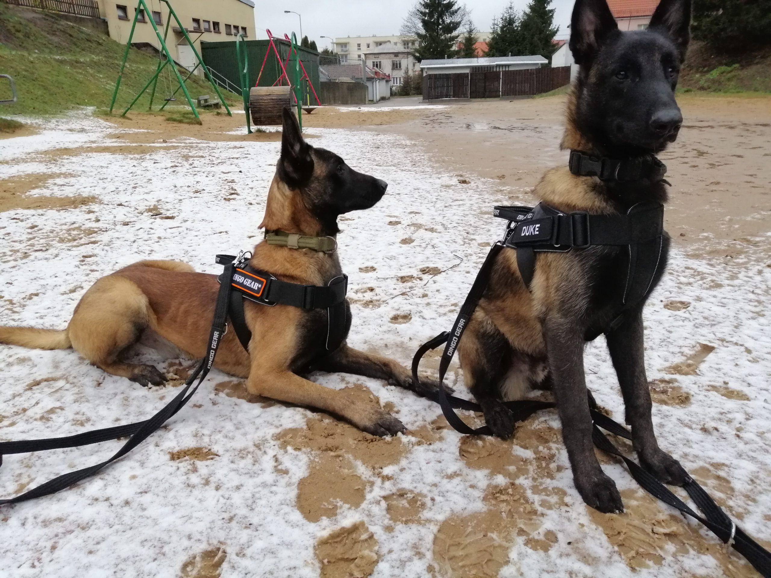Gołdapska Grupa Poszukiwawczo-Ratownicza i Dingo Gear