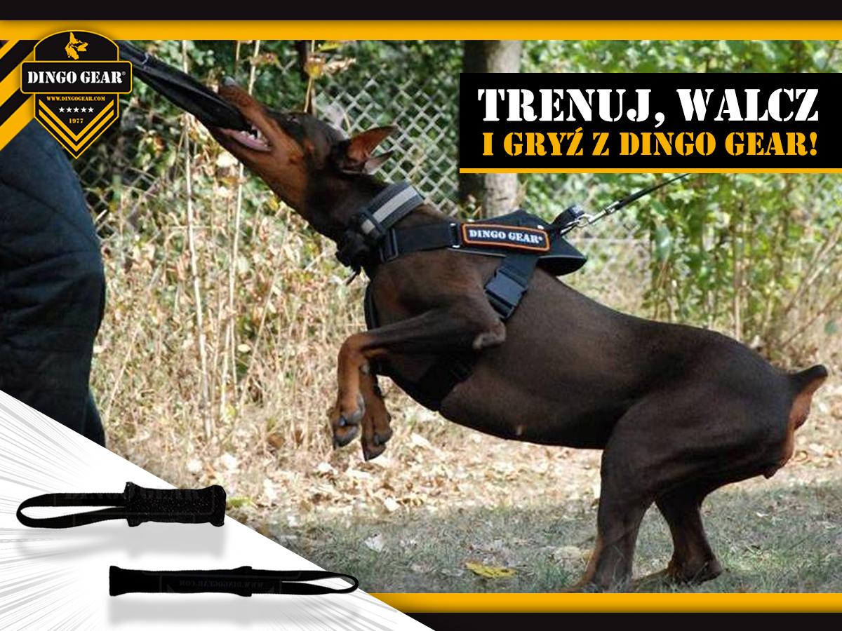 Trenuj, walcz i gryź z Dingo Gear